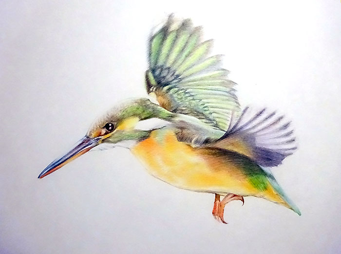 色鉛筆画で鳥を描いてみた。入門編の描き方と手順:イラスト