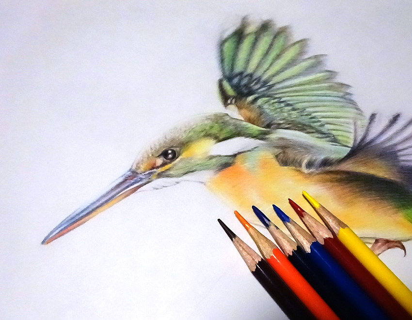 初めての色鉛筆画で「鳥」を描くのに挑戦!選び方とコツは分かるのか?【初心者おじさんの趣味入門】